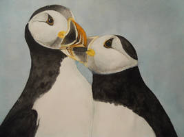 Puffin couple by Nairalin