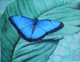 Blue Morpho Butterfly by Nairalin