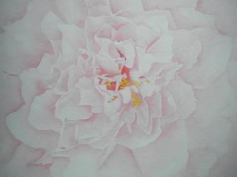 Rose Dream by Nairalin