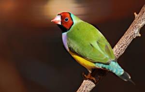 Rainbow Bird by MarilynFaye