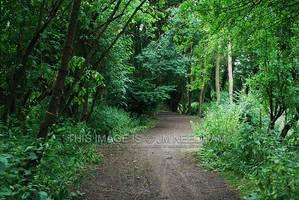 Green Path by JMNeedhamArt
