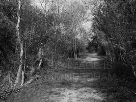 Woodland Path by JMNeedhamArt
