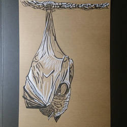 Pteropus vampyrus by pcitr