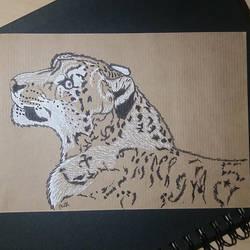 Panthera uncia by pcitr