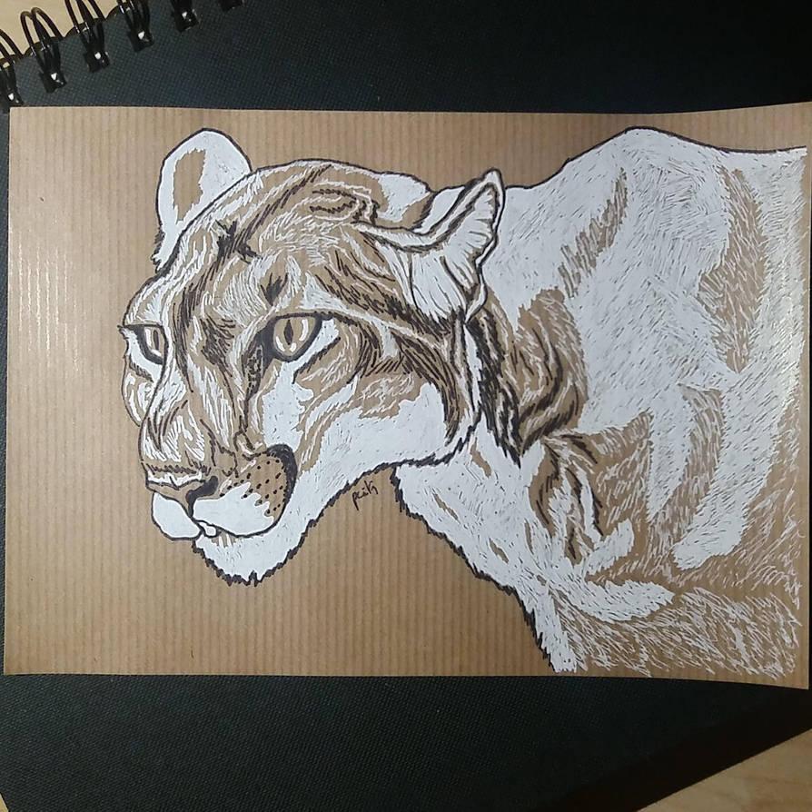 Puma concolor by pcitr