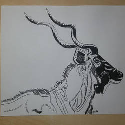 Tragelaphus strepsiceros by pcitr