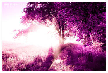 Back to the light by werol