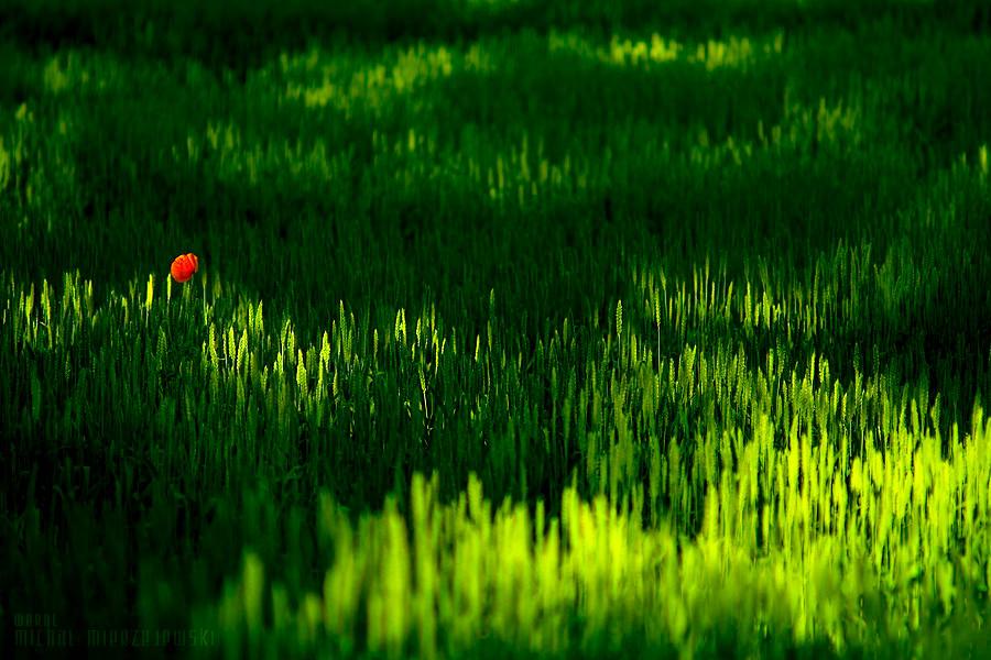 alone by werol