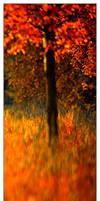 on fire by werol