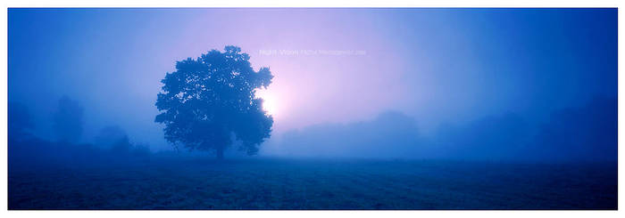 Night Vision by werol
