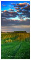 Fields of Joy by werol
