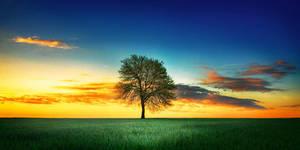 wuthering tree II by werol