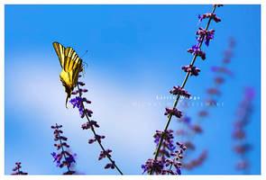 Little wings by werol