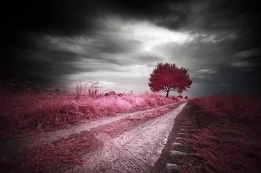 Roads 002 by werol