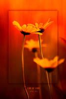 fire of love by werol