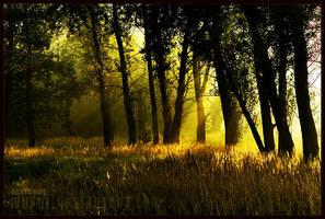 awakening by werol