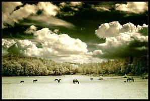 infrared pasture by werol