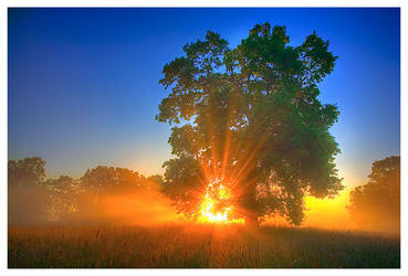 good morning ... by werol