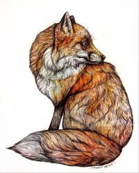 Red Fox  by jessburnett