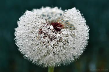 Crystal Dandelion by Et-Manue-Elle