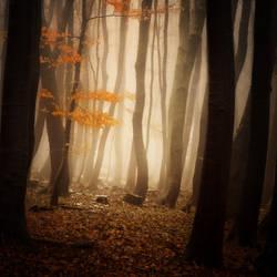 -Where spirits gathered- by Janek-Sedlar