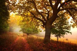 -Meditation of autumn- by Janek-Sedlar