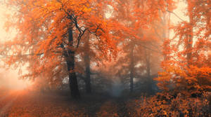 -Crossroads of life- by Janek-Sedlar