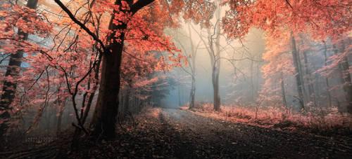 -Eternal sunshine of the inside world- by Janek-Sedlar