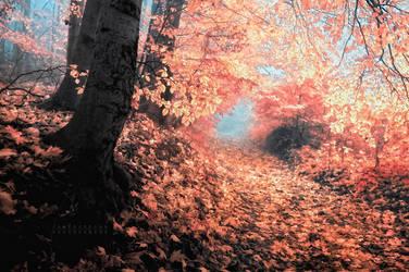 -Shortcut to wonderland- by Janek-Sedlar
