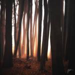 -Leaving the jail at dawn- by Janek-Sedlar