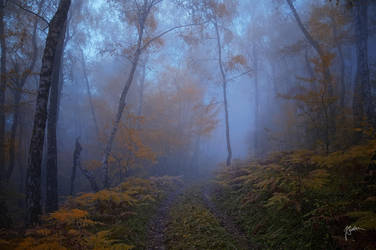 -Dialog without words- by Janek-Sedlar