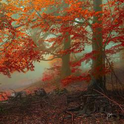 -Ancient calling of autumn- by Janek-Sedlar