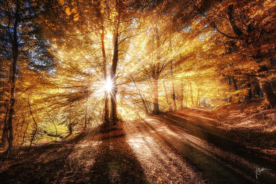 -Autumnal dreaming- by Janek-Sedlar