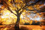 -Flaming tree- by Janek-Sedlar