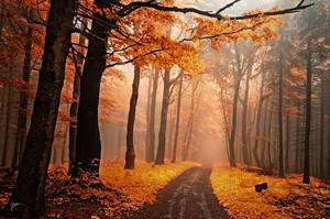-Secrecy of autumn roads- by Janek-Sedlar