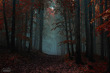 -Another dimension- by Janek-Sedlar