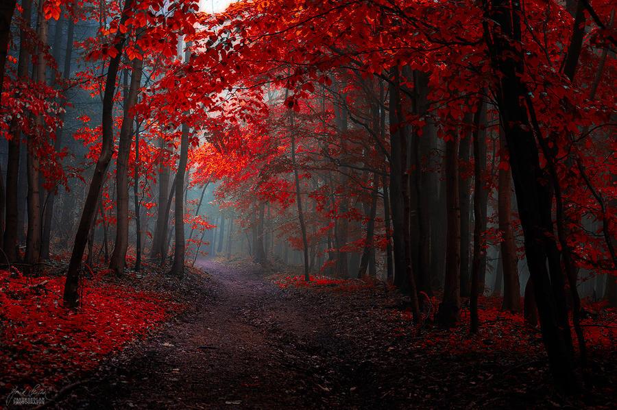 -The Dream inside a dream- by Janek-Sedlar