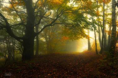 -Autumn melodies- by Janek-Sedlar