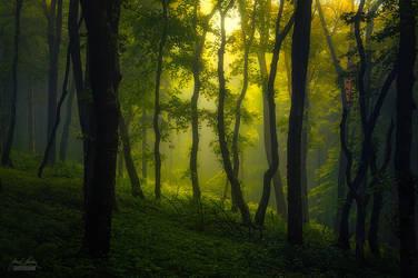 -Mystique of the mist- by Janek-Sedlar