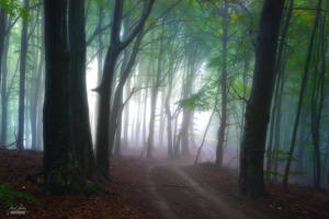 -The road to cleansing mind- by Janek-Sedlar