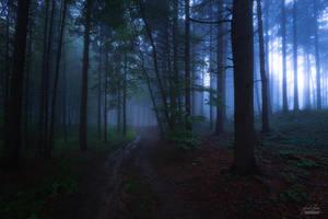 -Evening cloak of the forest- by Janek-Sedlar