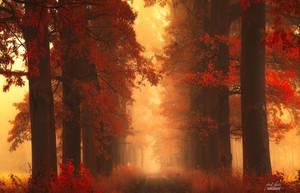 -Mesmerizing poetry of autumn- by Janek-Sedlar