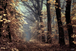 -Angels alongside our path- by Janek-Sedlar
