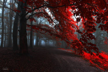 -The road of seraphines- by Janek-Sedlar
