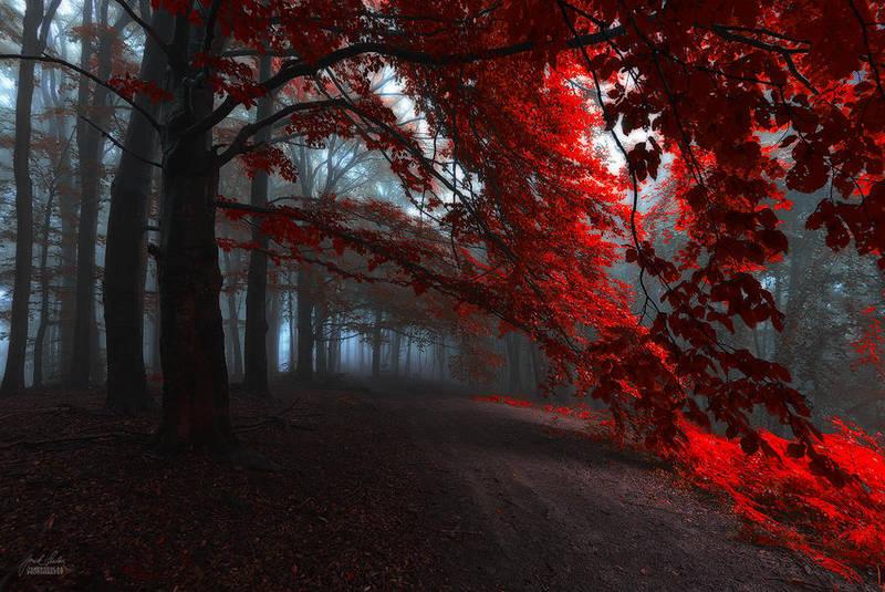-The road of seraphines- by Janek-Sedlar