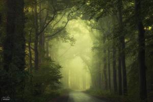 Journey into the mystery garden by Janek-Sedlar