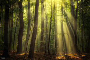 When the sun touch your heart by Janek-Sedlar