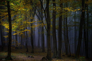 -Evening ambient of the wood- by Janek-Sedlar