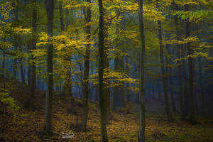 -Mysterious power of the woods- by Janek-Sedlar