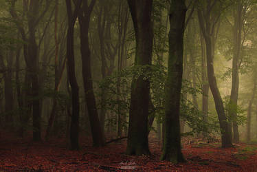 -Forest consciousness- by Janek-Sedlar
